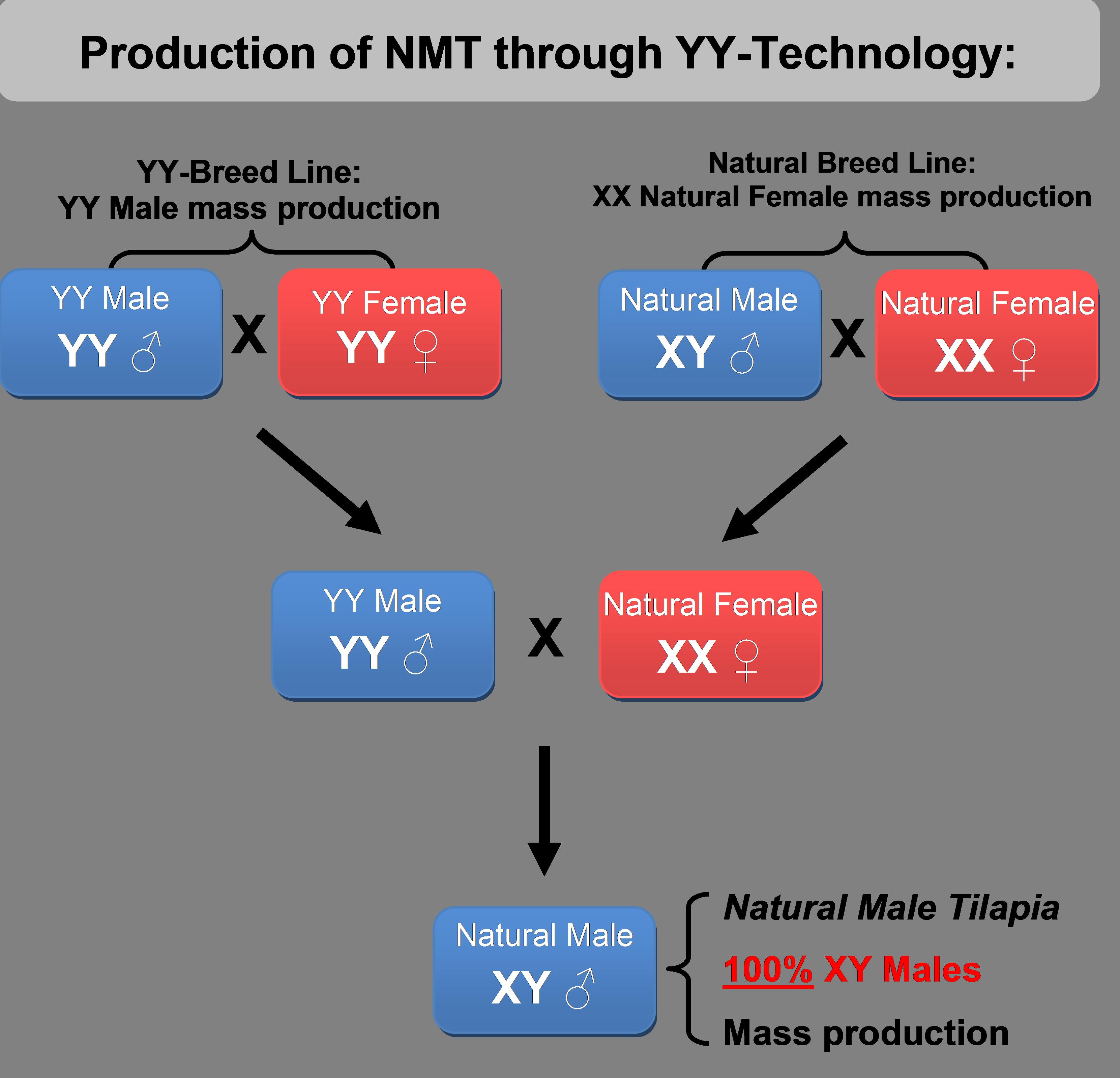 YY-Technology Explained c3cc37ee1d39